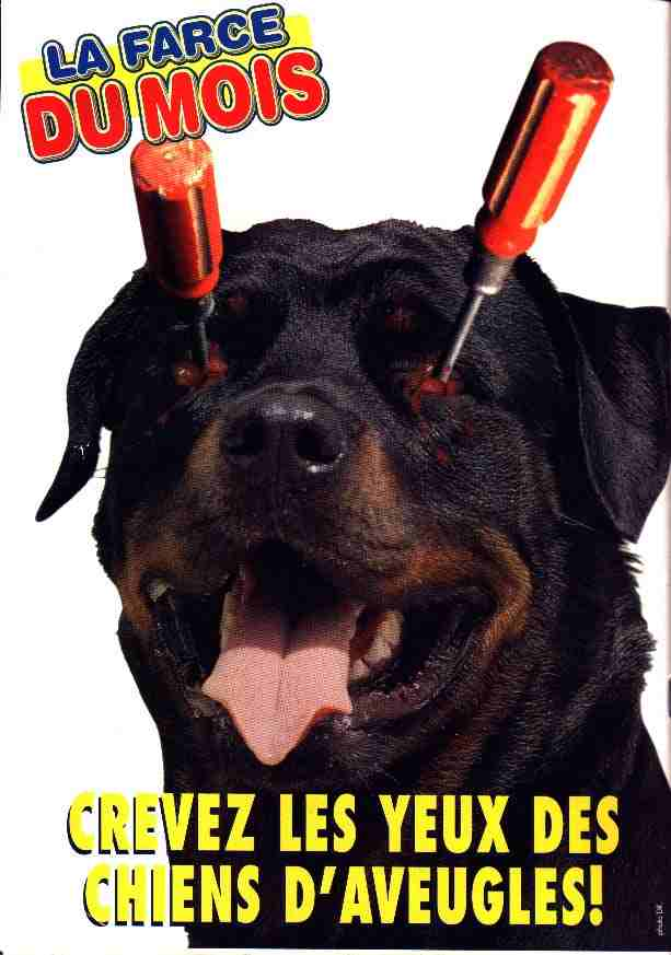 ecoeurant Chiens